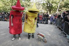 The Tompkins Square Park Halloween Dog Parade