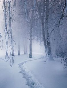So enchanting and magical - lets take a snowy stroll through the magic forest! Magic forest by Alexei Mikhailov Winter Magic, Winter Snow, Winter Christmas, Winter Walk, Winter Blue, Magic Snow, Alaska Winter, Winter Road, Hello Winter