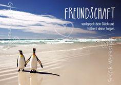 Freundschaft - Postkarten - Grafik Werkstatt Bielefeld True Friendship Quotes, Big Love, Great Memories, Wise Quotes, Albert Einstein, True Words, Best Friends, Thoughts, Humor