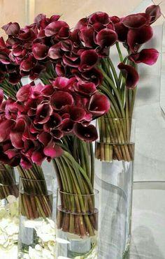 How to a stunning floral arrangement on a budget from celeb florist Jeff Leatham Arrangements Ikebana, Modern Flower Arrangements, Deco Floral, Arte Floral, Calla Lillies, Calla Lily, Amazing Flowers, Beautiful Flowers, Jeff Leatham