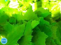 OLYMPUS DIGITAL CAMERA Greek Cookbook, Crete Holiday, Greek Cooking, Greek Dishes, Olympus Digital Camera, Photo Book, New Recipes, Greece, Herbs