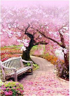 Diamond Painting Pink Blossom Trees – Miracles from Nature Beautiful Landscapes, Beautiful Gardens, Beautiful Flowers, Beautiful Places, Beautiful Life, Pink Blossom Tree, Cherry Blossoms, Pink Trees, Nature Wallpaper