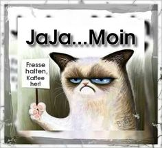 ideas for funny good morning pics grumpy cat Good Morning Funny Pictures, Funny Photos, Cool Pictures, Morning Pics, Funny Animal Videos, Videos Funny, Funny Animals, Funny Shit, Funny Cats