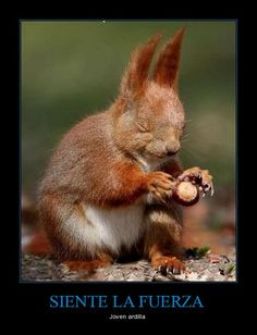 Feel the force young squirrel!!!!(translation)