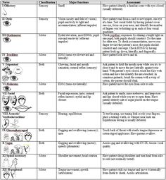 Mohawk College RPN Student Resource: Cranial Nerve Neuro Assessment Cheat Sheet - Not great Ax tips but good general sheet