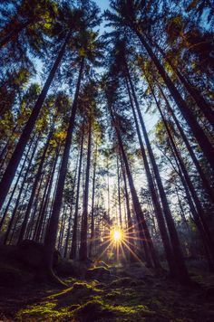 Deep Forest by Mats Forsberg on 500px