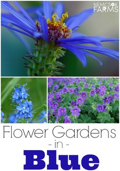 Beautiful Blue Flowers for Your Yard and Garden