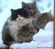 Snow and Cats