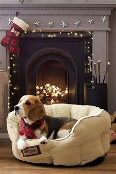 Merry Christmas! Feliz Navidad! Vesele Vanoce! Wesołych Swiat! Buon Natale!