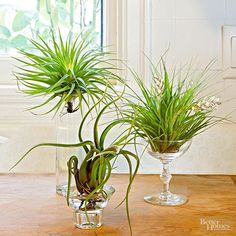 Love air plants, but not sure how to display them? Get inspired by these unique air plant creations.