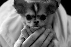 Awww....want one