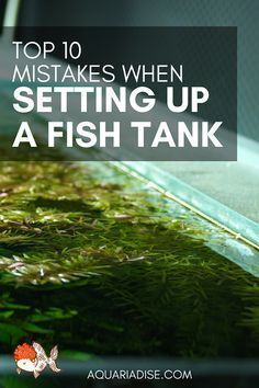 Setting up a fish tank takes planning, but it doesn't have to be difficult. Avoid these top mistakes when setting up an aquarium, so your fish can thrive. Betta Aquarium, Tropical Fish Aquarium, Tropical Fish Tanks, Betta Fish Tank, Home Aquarium, Freshwater Aquarium Fish, Planted Aquarium, Aquarium Ideas, Aquarium Setup