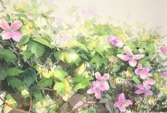 https://www.facebook.com/MiaFeigelson  By Abe Toshiyuki (あべとしゆき), from Sakata City, Japan (b. 1959)  - watercolor on paper; 30 x 43 cm - [Realism in watercolor Painting] http://www.abety-art.com/english/ https://www.facebook.com/abetyart