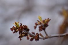 Spring - So I Was Thinking Spring Pictures, Bud, Gem, Eyes, Knob