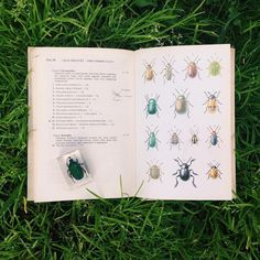 Little bug #bugs#livelittlethings#nature#botanical#woods#forest#naturelove#naturetreasures#book#illustration#insect#vintage#insectslovers#liveauthentic#livefolk#livegreen#liveoutdoors#p3top