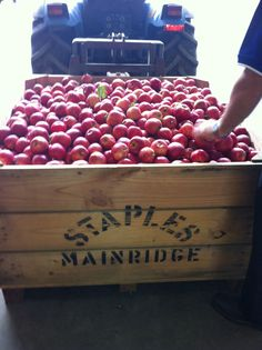 First bin of #apples #picked for 2014