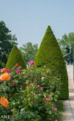 Roses in full bloom, Jardin du Musée Rodin, May 2012 (above and all below).