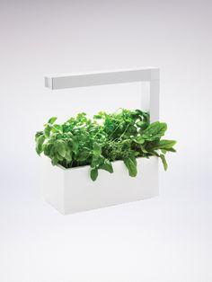 Herbie Tregren - Le potager urbain intelligent à croissance rapide  Plus besoin d'avoir la main verte 🌱👌