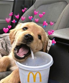 Cute Dogs And Puppies Wallpaper Super Cute Puppies, Cute Baby Dogs, Cute Little Puppies, Cute Dogs And Puppies, Cute Little Animals, Cute Funny Animals, Doggies, Lab Puppies, Free Puppies