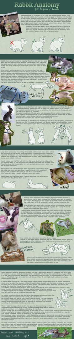 Rabbit Anatomy / Part 3: poses and behavior by upui