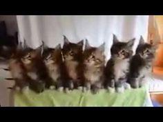 katten dansen op muziek #lol