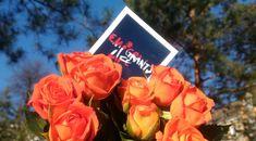 Сегодня в Австрии отмечают День святого Валентина и ждут приближения весны. Что из этих двух составляющих важнее для местных жителей? Расскажем в сегодняшнем материале. Rose, Flowers, Plants, Pink, Roses, Flora, Plant, Royal Icing Flowers, Flower