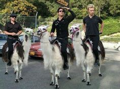 Green Day riding llama's>>>>This may quite literally be the best thing I've ever seen. Emo Bands, Music Bands, Deep Fried Twinkies, Green Day Billie Joe, Billie Joe Armstrong, Music Memes, To Infinity And Beyond, Pierce The Veil, Film Serie