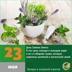 День Симона Зилота