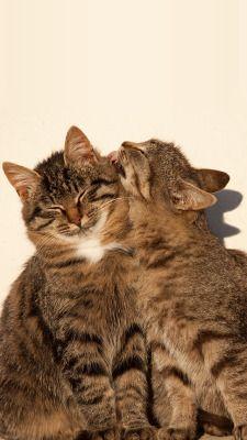 Cat Lockscreen Tumblr Cute Cat Wallpaper Cat Wallpaper Cats