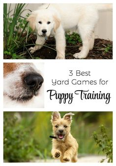 If you've got a new puppy in the house, you're probably looking for creative training tips. Check out these 3 best yard games for puppy training this spring! Games For Puppies, Dog Games, Puppy Care, Pet Puppy, Pet Care, Pet Dogs, Puppy Training Tips, Training Your Dog, Dog Behavior