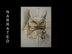 How to draw an Owl - realistic - YouTube