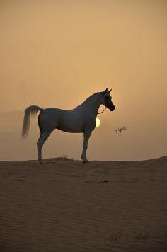 Nader Al Aliaa                                                                                                                                                      More