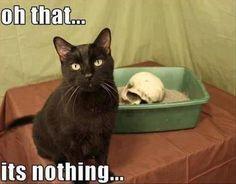 #animal #funny #humor #cat