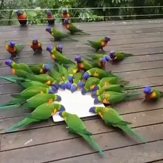 parrots are happy to eat - Smart birds, green parrots, feed animals, cute animals Cute Birds, Pretty Birds, Beautiful Birds, Animals Beautiful, Nature Animals, Animals And Pets, Cute Animals, Exotic Birds, Colorful Birds