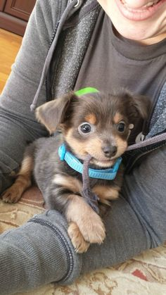 Even when she's causing a bit of trouble, she manages to make it look cute. | 21 Signs Your Dog Is The Best Dog Ever