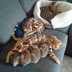 Joel's kittens
