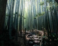 bamboo forest  by samhorine