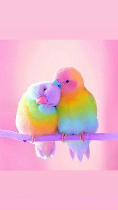Two love birds. Cute Birds, Pretty Birds, Beautiful Birds, Animals Beautiful, Cute Baby Animals, Animals And Pets, Funny Animals, Exotic Birds, Colorful Birds