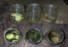 腐る野菜と枯れる野菜【腐敗実験】 Toxic Foods, Pickles, Sprouts, Cucumber, Vegetables, Vegetable Recipes, Pickle, Zucchini, Veggies