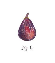 Fig 1. Illustration by http://alicelivingstoneillustration.tumblr.com/post/53938870936/fig-1