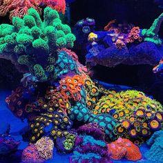 Reef Tank and Saltwater Fish Coral Reef Aquarium, Saltwater Aquarium, Coral Reefs, Coral Reef Pictures, Ocean Sleeve, Beautiful Sea Creatures, Reef Tanks, Fish Tanks, Pet Fish