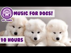 Anti Anxiety Music for Dogs! Cure Depression in Your Puppies! Help your Dog Relax! - YouTube