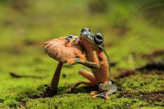 24 espèces de grenouilles et crapauds très peu connues mais pourtant incroyables !   Daily Geek Show