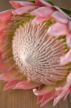 The king of all the flowers, pink king protea. Flor Protea, Protea Art, Protea Flower, Exotic Flowers, Pink Flowers, Paper Flowers, Beautiful Flowers, Art Floral, Protea Wedding
