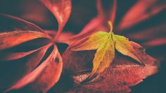Autumn in Norway Abstract Nature, Macro Photography, Norway, Plant Leaves, Autumn, Plants, Fall, Flora, Plant