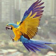 Feliz día! @Regrann from @mabelcornago  #LaCuadraU #GaleriaLCU #Caracas #Aves #Nature #Naturaleza #Macaws
