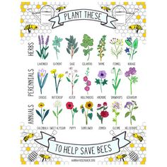 16x20 poster *or* 8x10 digital print of an original gouache & ink painting  Illustration of 7 herbs, 7 perennials and 7 annuals that are known to attract bees. Plant and care for these in an ecological way (without the use of harmful chemicals) to help. Spread the word and save the bees!  16x20 poster is printed on satin paper; 8x10 print is printed on matte paper. Both ship securely in mailing tubes.  **Looking to add a 16x20 poster to your classroom? Message me about a teacher discount!  ©…