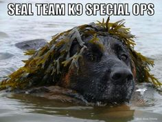 MWD Navy  Sea special ops