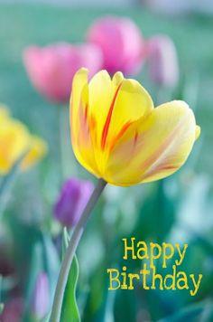 Happy Birthday Gif Images, Happy Birthday Greetings Friends, Happy Birthday Woman, Happy Birthday Funny, Happy Birthday Messages, Happy Birthday Quotes, Birthday Wishes Flowers, Birthday Wishes Cake, Birthday Cheers