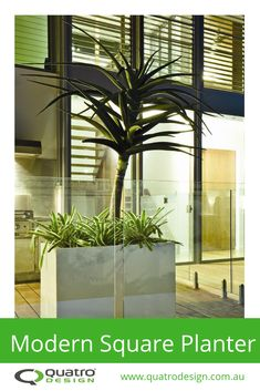 Create a statement by using a sculptural succulent like Aloe barberae in a modern square planter box to compliment a modern architectural theme. Our large cube planter box forms the centre-piece around the pool deck area of this luxurious Noosa residence. Square Planter Boxes, Modern Planters, Centre Pieces, Aloe, Succulents, Landscaping, Deck, Sculpture, Luxury